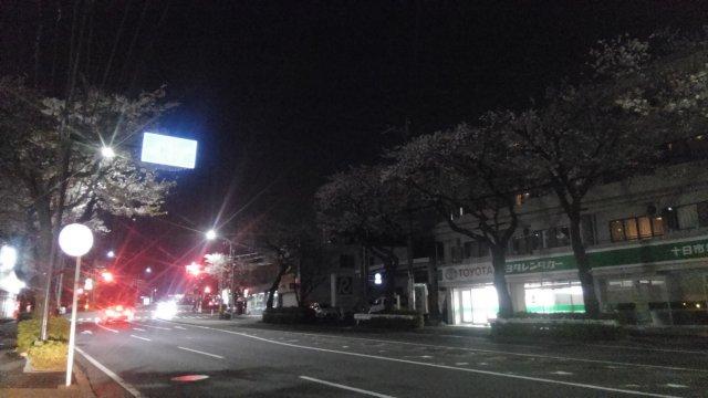 横浜の桜を見るバイク乗り。ドライブするスポットのオススメは?