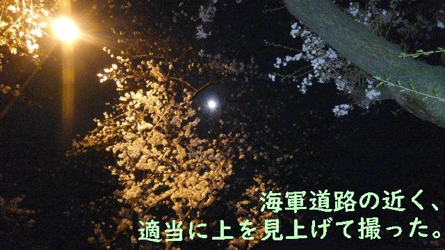 横浜の夜桜ドライブ。瀬谷の海軍道路~環状4号他。